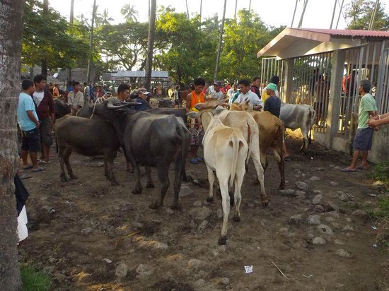 Malatapay Market: Cattle for sale