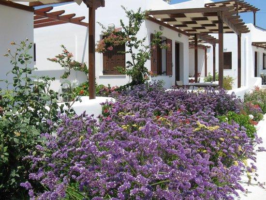 Mirabeli Studios: More beautiful gardens