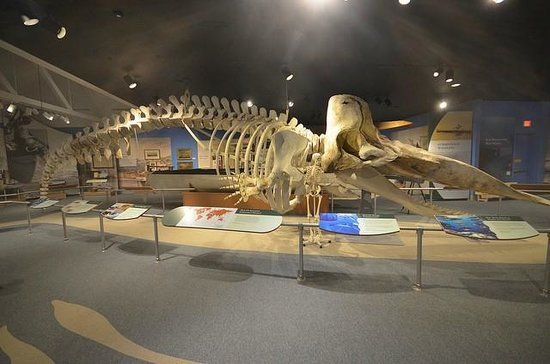 New Bedford Whaling Museum: Sperm Whale Skeleton
