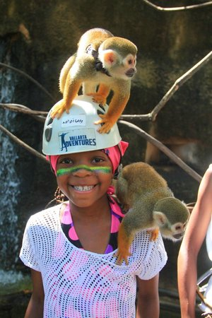 Vallarta Adventures - Las Caletas Beach Hideaway: interaction with monkeys on the way to hipline