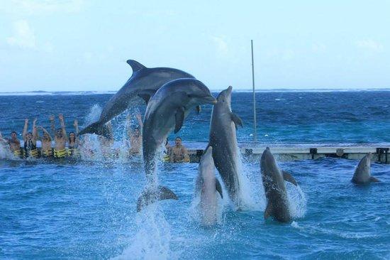 Dolphin Island : golfinhos na plataforma