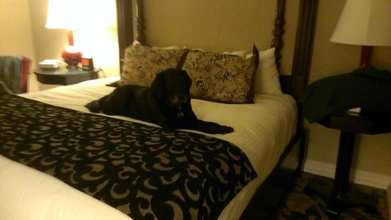 The Cheshire: Hanna enjoying the comforts of our room