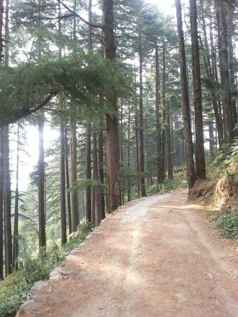 Club Mahindra Kanatal: Calmness of forest