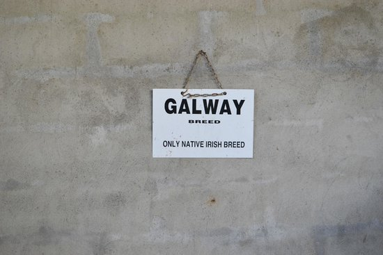 Rathbaun Farm: Galway