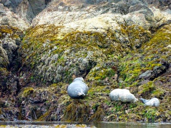Subtidal Adventures: Harbor Seals