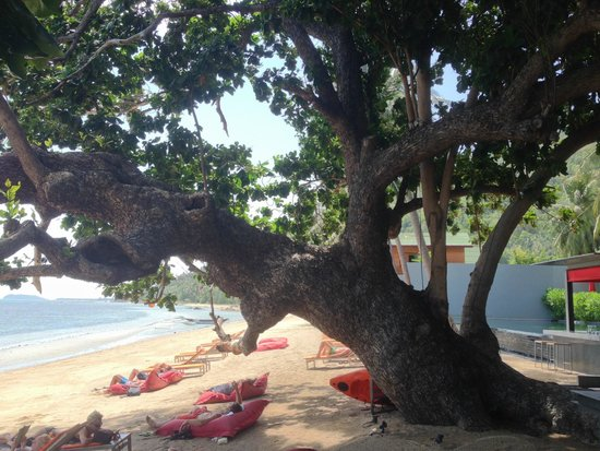 The COAST Resort - Koh Phangan : amazing tree on the beach