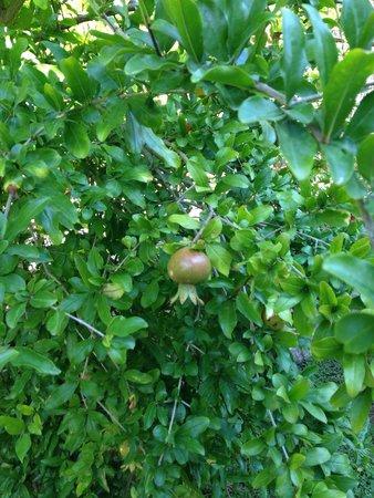 NOA Hotels Oludeniz Resort Hotel: Возле нашего номера фруктовый сад )