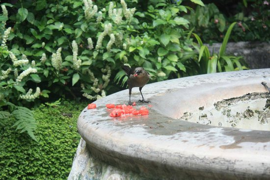 Cafe Condesa : Bird eating watermelon at the fountain.