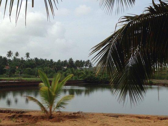 DoubleTree by Hilton Hotel Goa - Arpora - Baga: Lagoon view