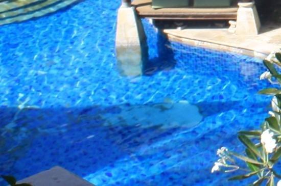 The Tanjung Benoa Beach Resort Bali: faience decollee dans la piscine