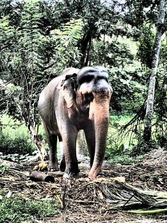 Millennium Elephant Foundation: Bedtime!