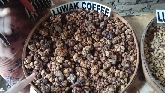 Negari Coffee: The original luwak coffee