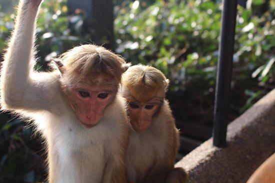 Heritance Kandalama : Wild life