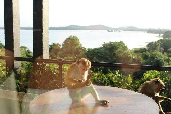 Heritance Kandalama : View