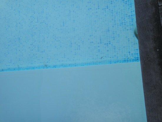 Hotel Restaurant Argos : piscine extérieure sale