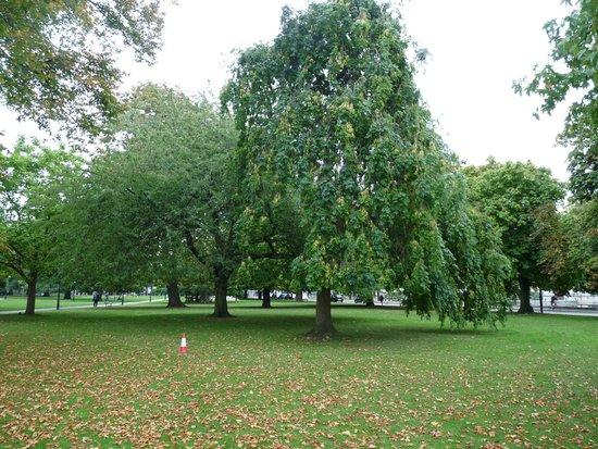Watts Park: Giant trees