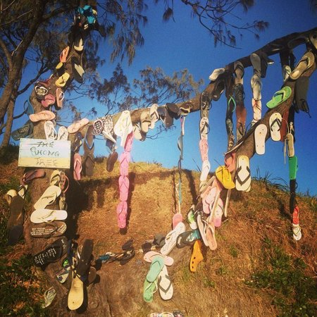 Discovery Parks - Emerald Beach: Thong Tree