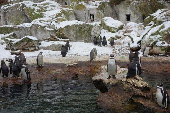 Tiergarten Schoenbrunn - Zoo Vienna: найдите цаплю...