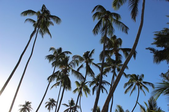 Dream of Zanzibar: palms