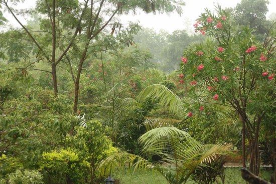 The Wildflower Resort: Greenery all around