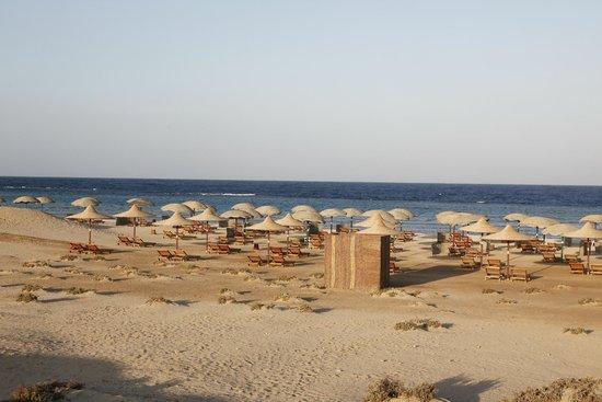 Gorgonia: stranden