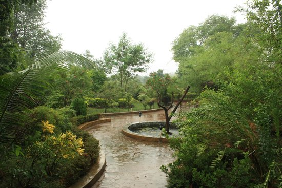 The Wildflower Resort: raining....