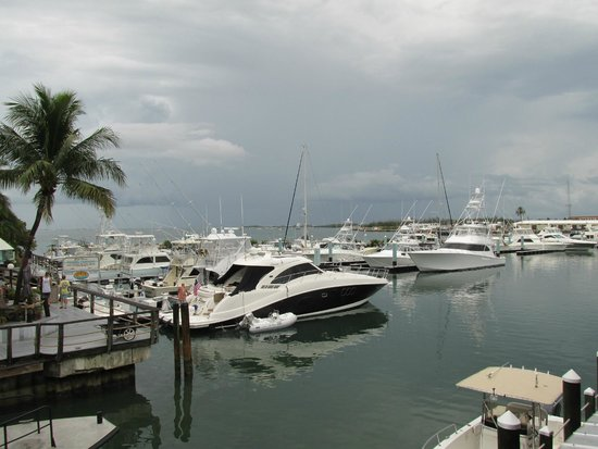 Alonzo's Oyster Bar: The View