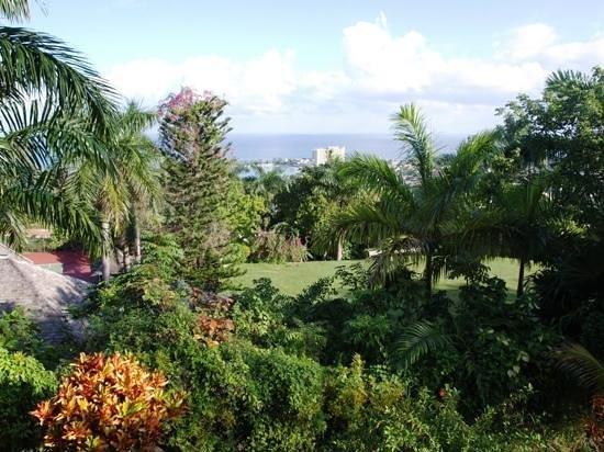 Garden House Jamaica: Garden