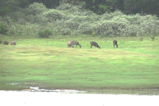 KTDC Lake Palace Thekkady: the animals