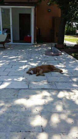 Il Boschetto: La mia cagnetta in super relax in bordo piscina. ..qui si che amano gli animali