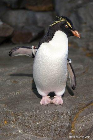 Osaka Aquarium Kaiyukan: Penguin
