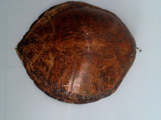 Novotel Dakar : real turtle shell at the restaurnat