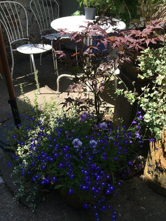 The Singing Kettle Tearoom: The lovely Courtyard