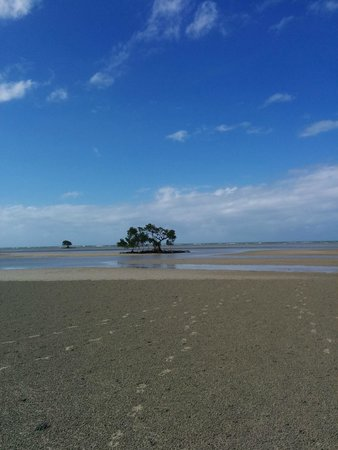 D'Arcy of Daintree 4WD Tours : Mangrove on Cowie Beach