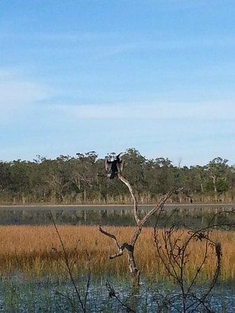 Jabiru Safari Lodge: Wetlands