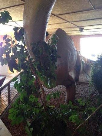 Jurassic Bart's Dinosaur Museum and Petting Farm: another big dino!