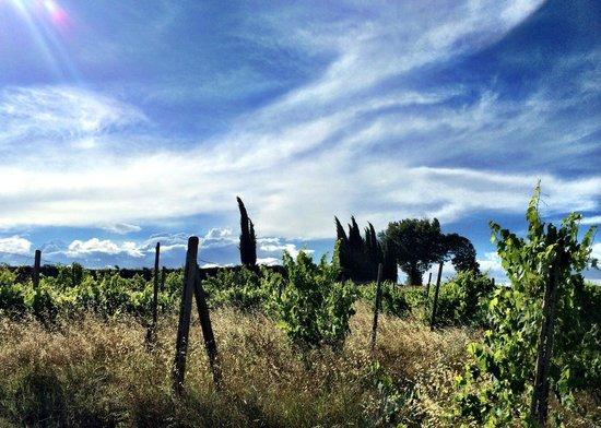 Villa la Selva: Vineyards