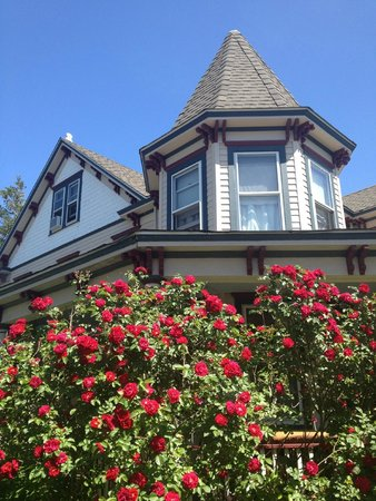 Roses in bloom at Ruby's Cove Bed and Breakfast