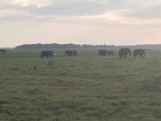 Amboseli National Park : Nomerous elephants