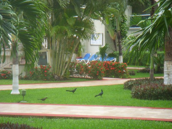Occidental Costa Cancun: Beautiful, often-overlooked landscaping