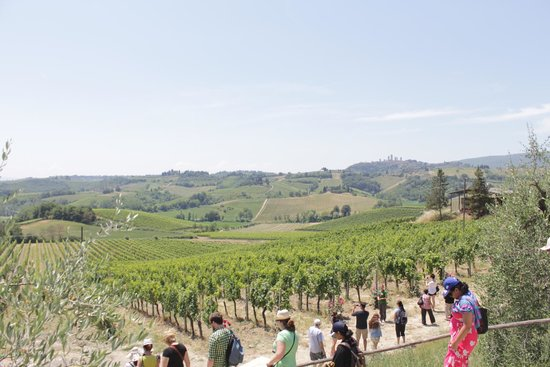 Walkabout Florence Tours : Chianti Region