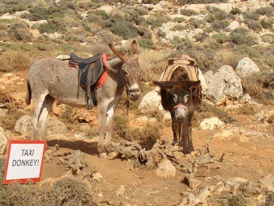 Balos Beach and Lagoon : Taxi Donkey