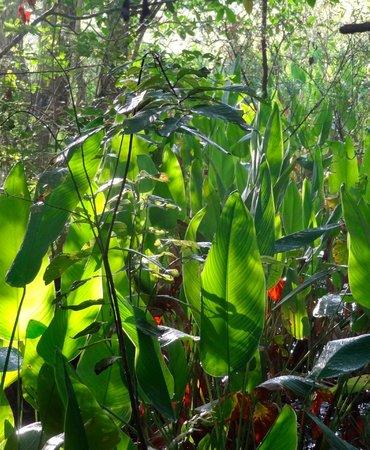 Corkscrew Swamp Sanctuary: Gorgeous foliage