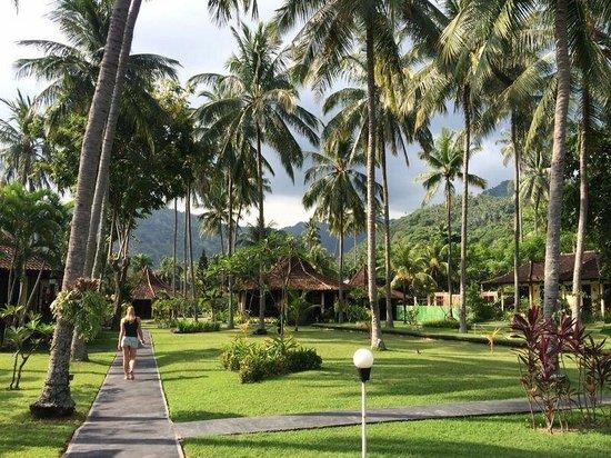 Mascot Beach Resort: The garden