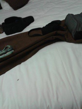 Hotel U Ricordu : fourmi volante sur le drap blanc, en bas à gauche