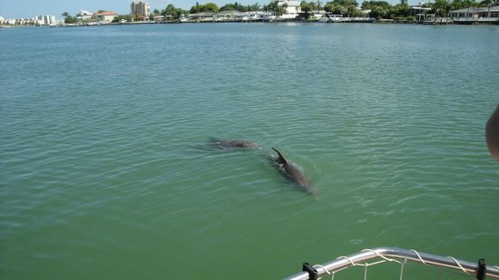 Dolphin Landings Charter Boat Center: Dolphin Greeting