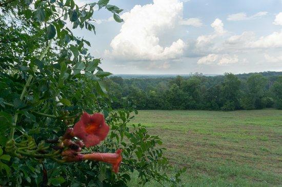 Carl Monk Sr. Overlook: Wildflower
