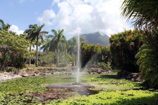 Botanical Gardens of Nevis : Nevis Botanical Gardens - lake