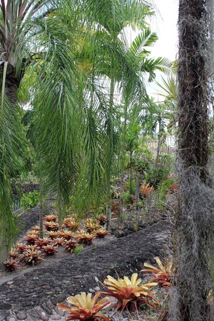 Botanical Gardens of Nevis : Well maintained gardens