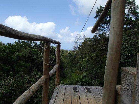 Big Island Eco Adventures II Zipline Canopy Tour: One of the last zip lines, ocean views behind